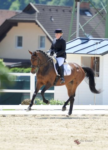 CDNP-B Alpen-Adria-Dressage Trophy im Glock Horse Performance Center
