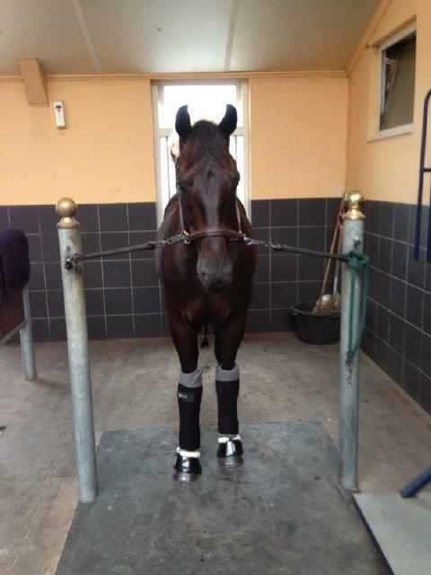 REITSPORTNEWS - Die Pferdesportagentur - GLOCK's EUROPEAN CHAMPIONSHIPS NEWS. Fahrt und Flug geschafft, erste Trainings absolviert - wir sind startklar!